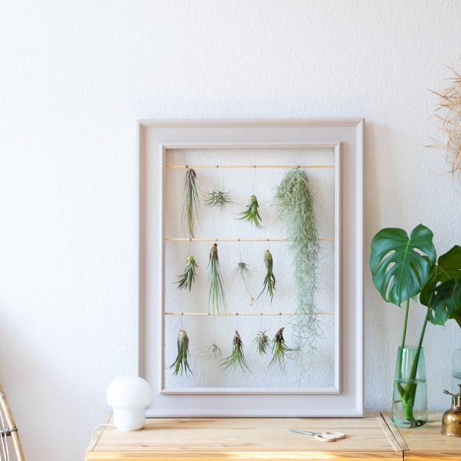 DIY Luftpflanzen vertikaler Garten schereleimpapier kreative Tutorials für DIY Geschenke, DIY Möbel und DIY Deko zum Basteln