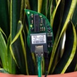 botanicalls_kit_in_plant_250.jpg
