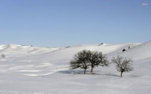 Hügel mit unberührtem Schnee, rechts einige einzelne Bäume vor einem hellblauen Himmel