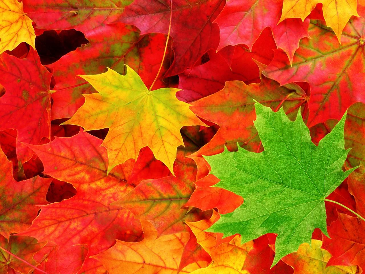 Herbst kostenlos bilder whatsapp Herbstbilder Für