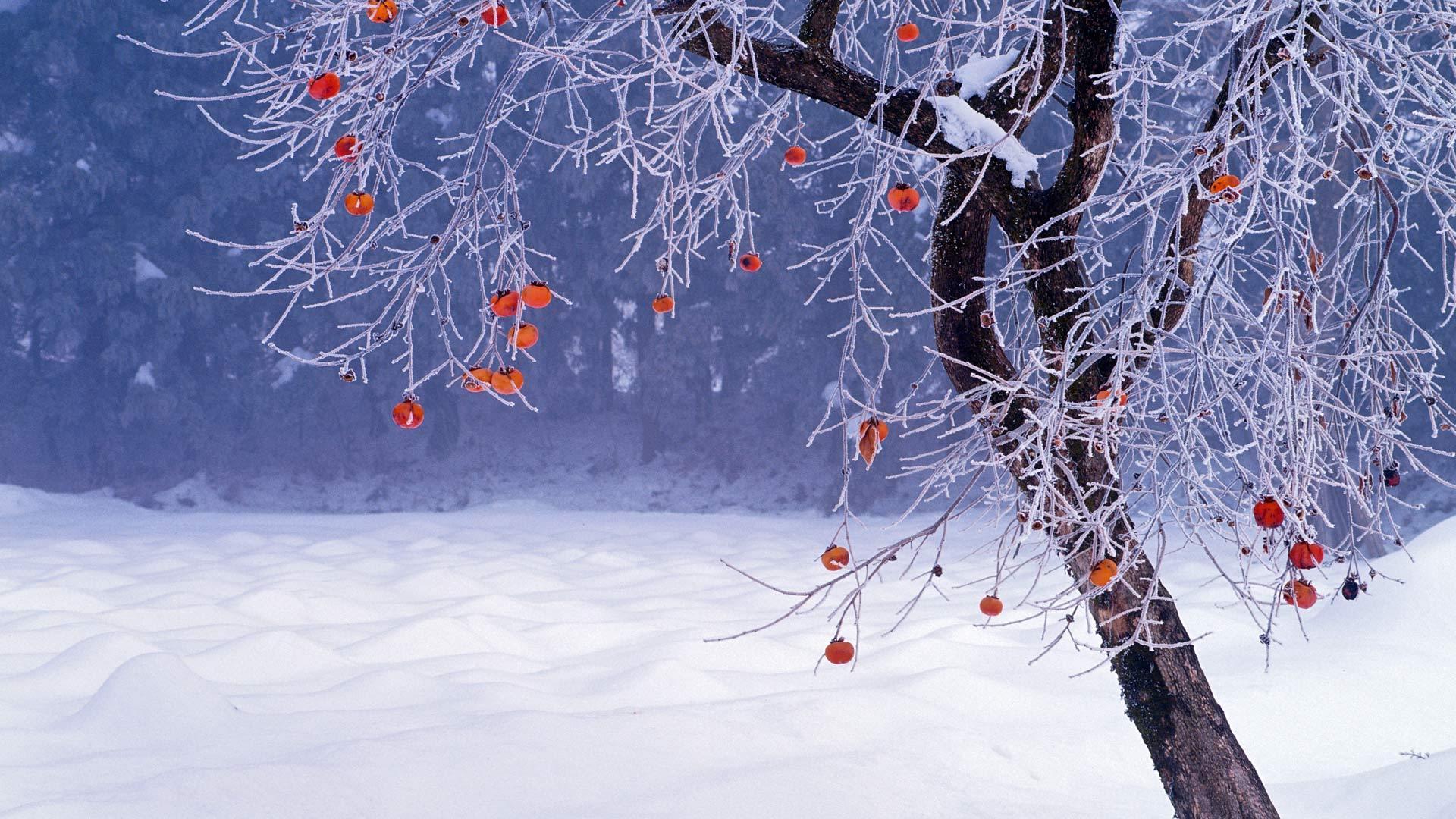 Desktop hintergrundbild kostenlos winter