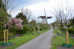 De ruitbomen bij volkstuincomplex vijfsluizen in Schiedam.