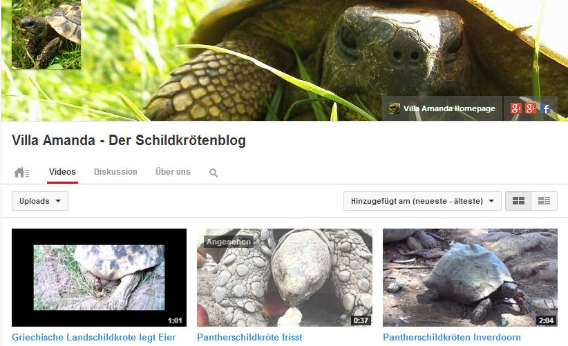 Schildkröte_Youtube