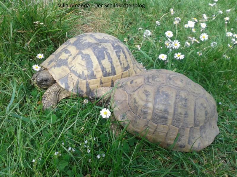 Schildkröten Fakt zum Wochenende #12