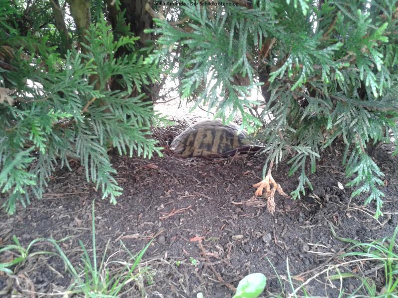Wenn die Schildkröte zu früh aus der Winterstarre erwacht
