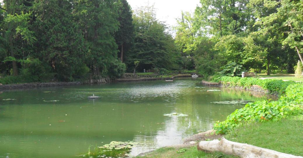 Die Europäischen Sumpfschildkröten im Melbweiher sind wieder da