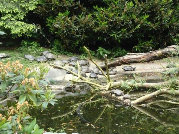 Schildkröten Opel Zoo
