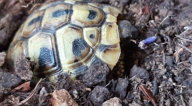 Schildkröten Saison 2020 endlich gestartet