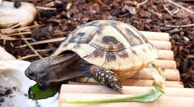 Entwicklung von Schildkrötenhals und -schädel wohl eng verknüpft