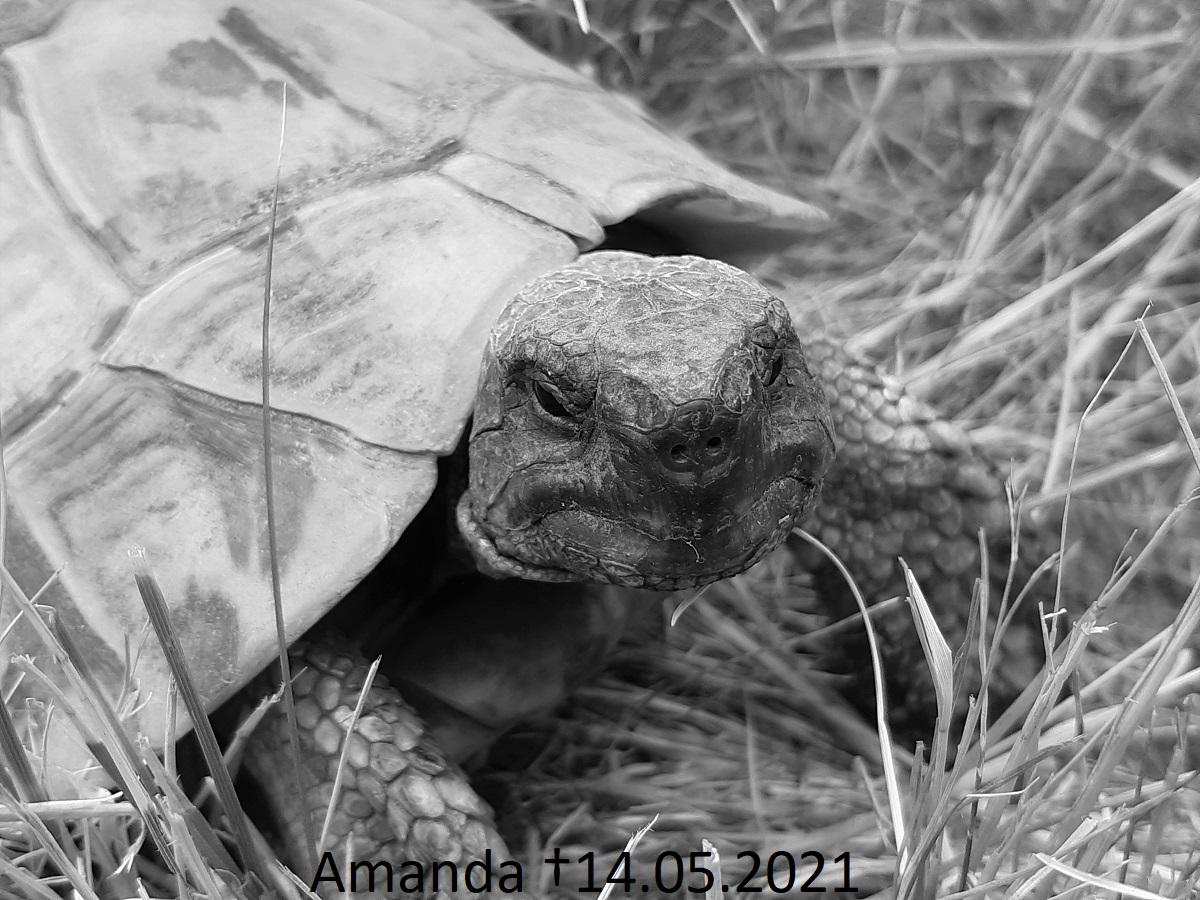 Read more about the article Eine der großen Amandas ist gestorben