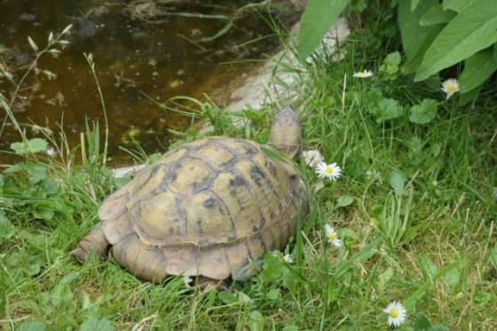 Griechische Landschildkröten Zoo Neuwied