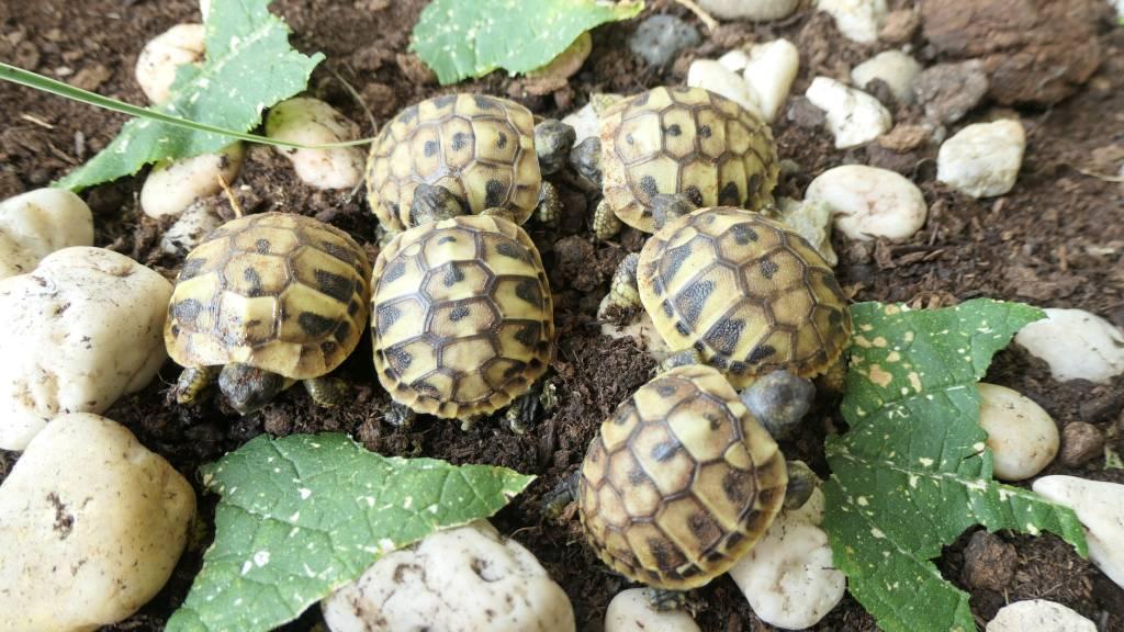 Read more about the article Schildkröten Babies 2021 sind geschlüpft und es gab einen Zwilling