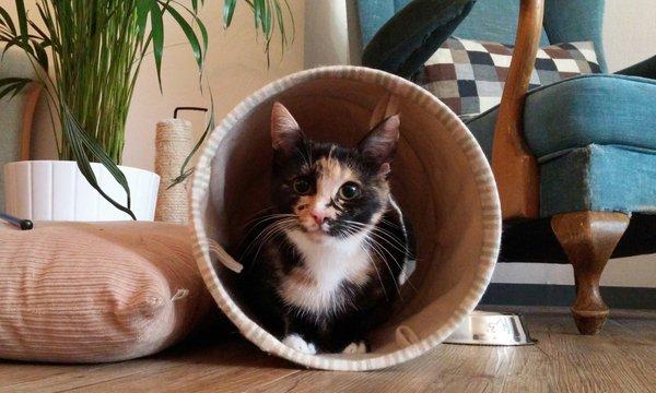 Groningen - hostel en kattencafé
