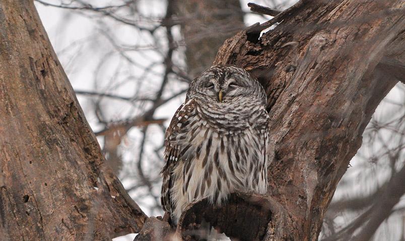 Beacons of Conservation, Schlitz Audubon