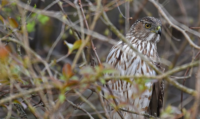 Beacons of Conservation Schlitz Audubon