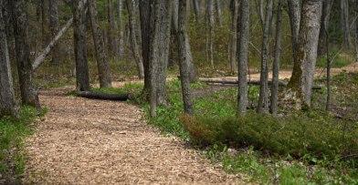 Hiking Trails at Schlitz Audubon