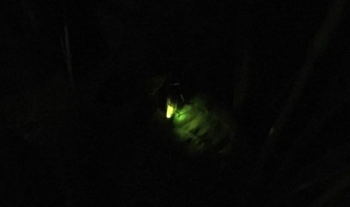 Schlitz Audubon Fireflies Milwaukee