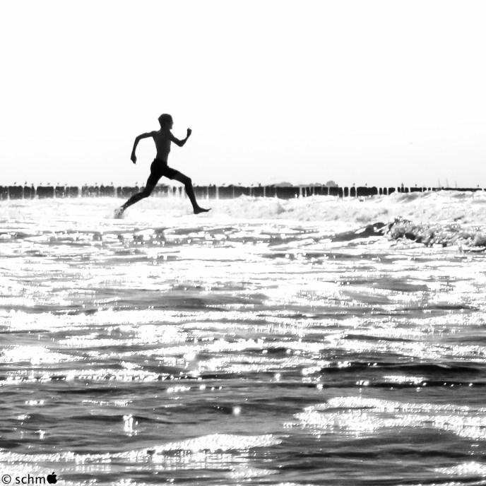 Wasserläufer