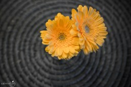 Blumengruß II