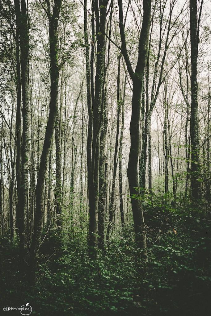 Wald-3