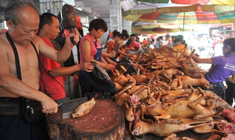 yulin-perros-china