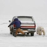 Fangis mit dem Eisbären