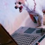 Was tut dieser Hund?
