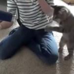 Katze kämpft gegen die Luft