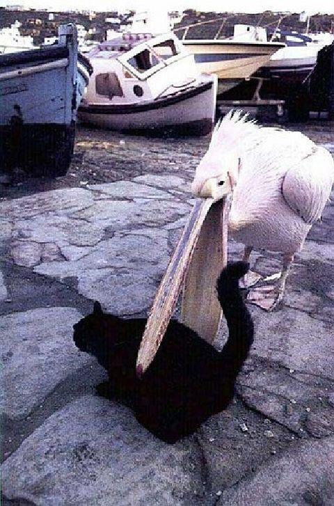 pelikankatze_wwwschneeseicherch