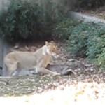 Reh-Fail im National Zoo in Washington