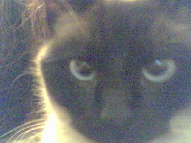 my familiar cat
