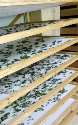 Regale mit getrockneten Kräutern