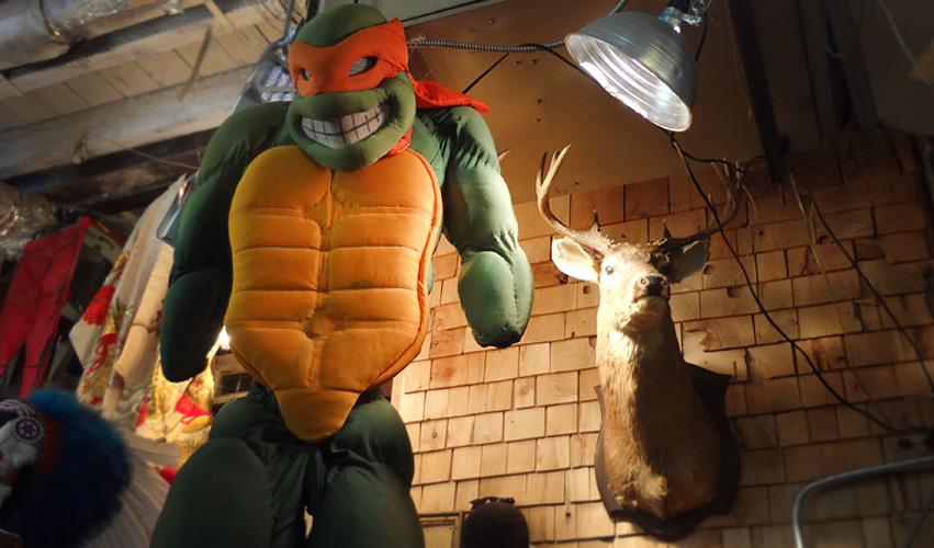 turtle-hirsch