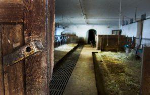blick-in-den-stall