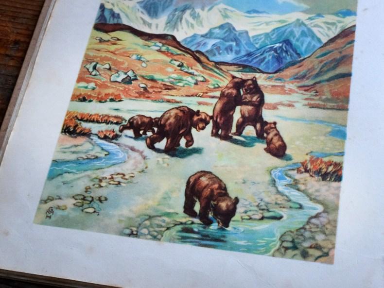 Braunbären - Buchillustration