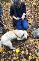 Trüffelhunde auf Suche im Wald - Graz
