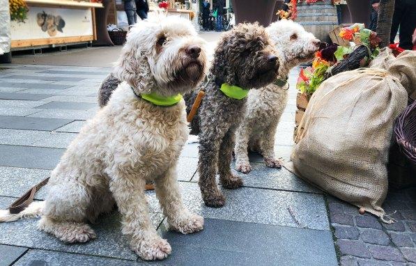Trüffelhunde auf Grazer Trüffelmarkt