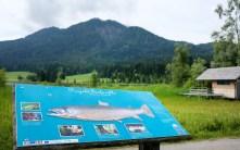 Projekt Seeforelle Weissensee
