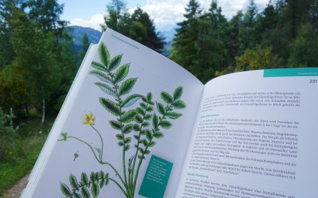 Kräuterkunde aus dem Alpenraum