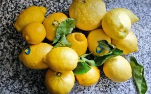 Die Schale der Zitronen soll nicht behandelt sein