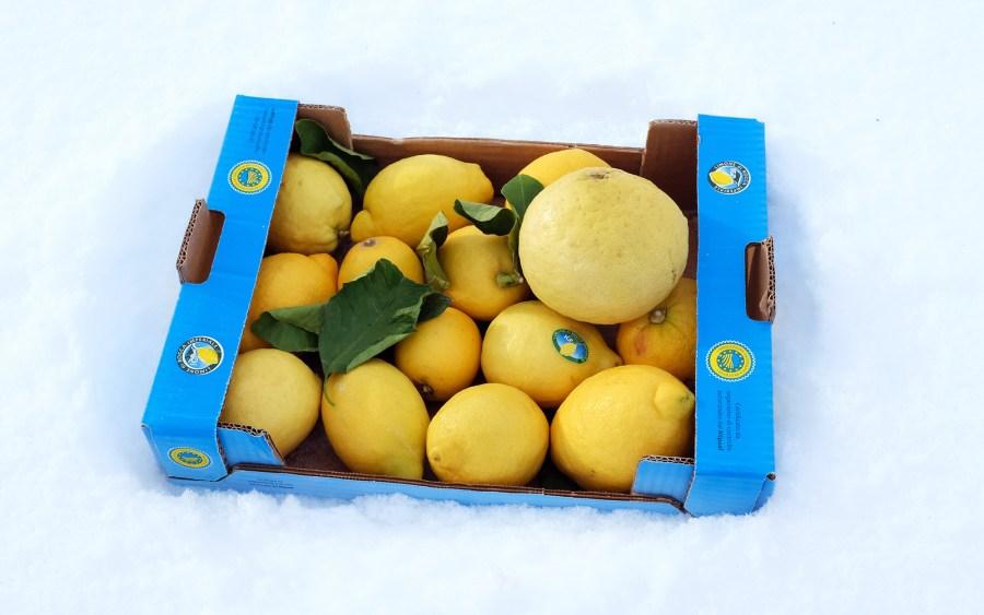 Die beste Zeit für Zitronen: der Winter