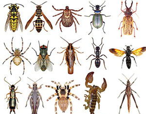 Image result for images of bugs