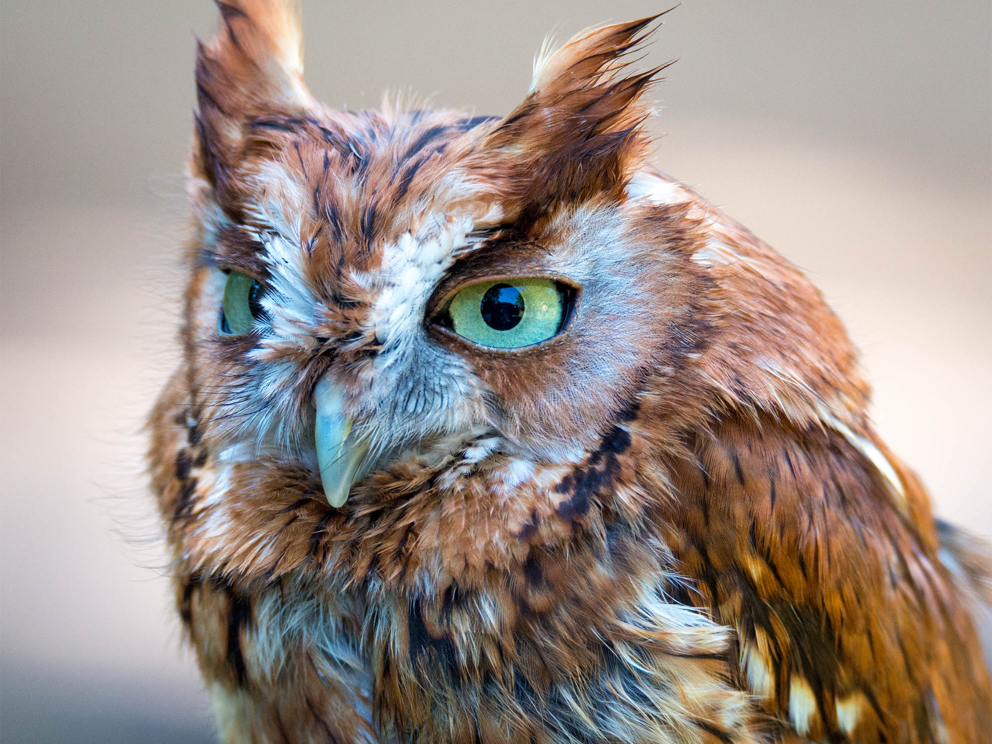 Owl Worksheets For 4th Grade