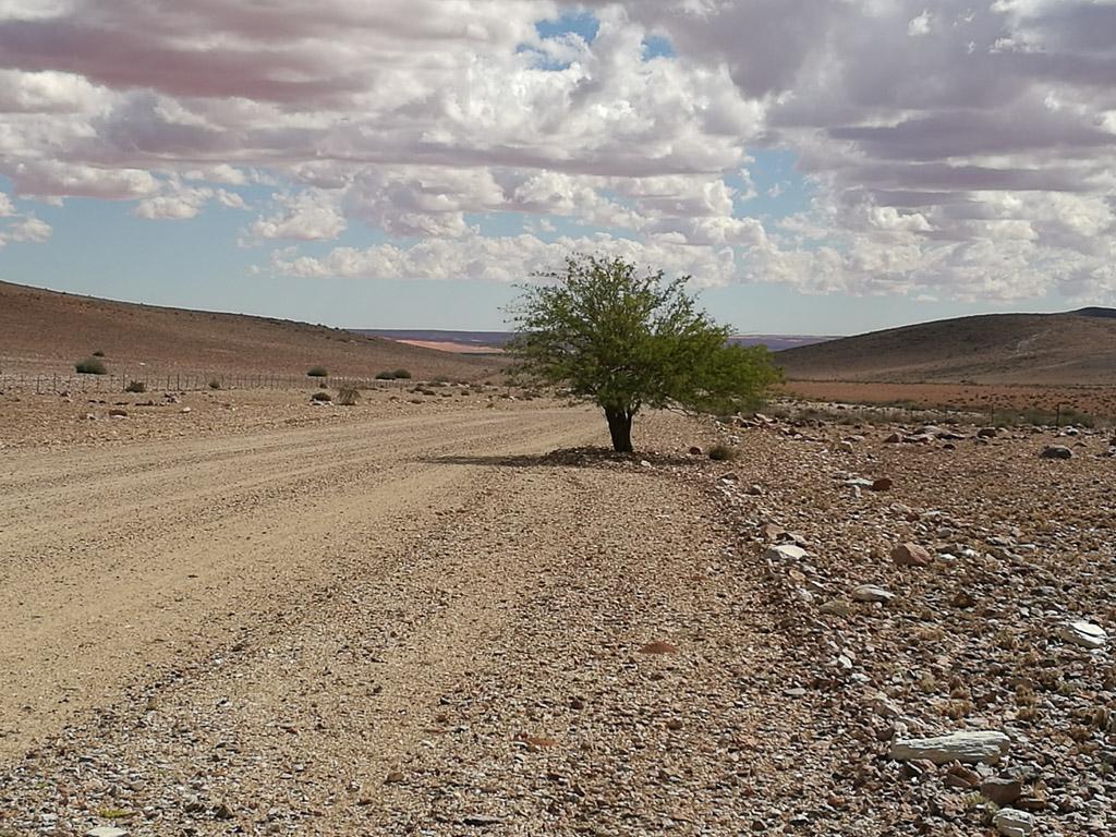 Foto: Einsamer Baum in Namibia am Straßenrand