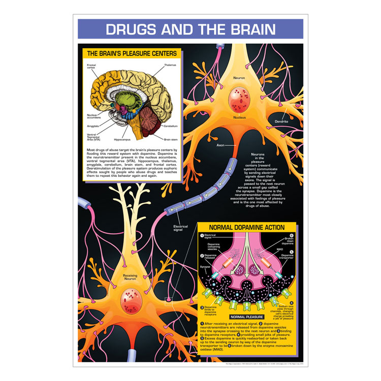 Drug Education Posters Drugs And The Brain