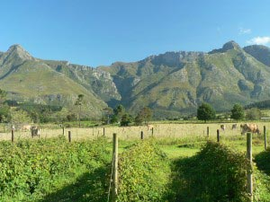 Wildebraam Berry Fields in Swellendam, South Africa