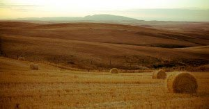 Overberg Wheat Fields near Swellendam South Africa