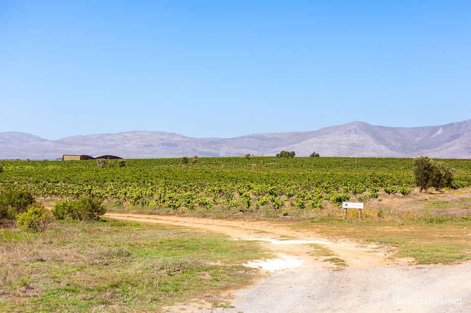 wine estates near swellendam