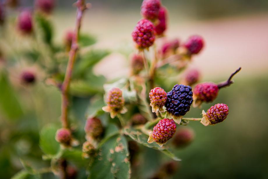 The Berry Guest Farm Swellendam