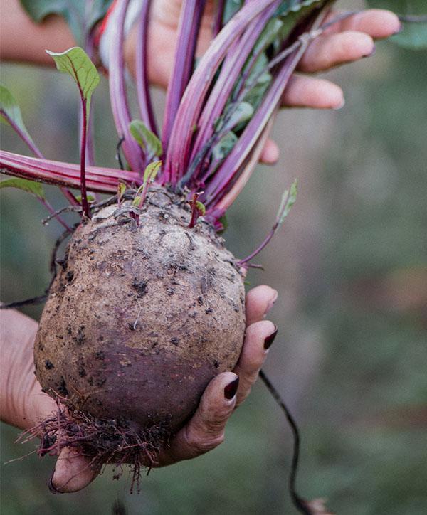 produce 11